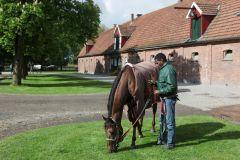 Aus dem Archiv: La Sabara 2013 in Ravensberg mit Eddie Pedroza. www.galoppfoto.de - Marius Schwarz
