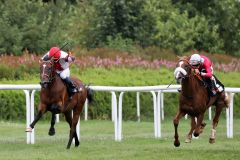 1¼ Längen trennen die beiden Erstplatzierten, Laccario (links) und Django Freeman, im Ziel. Foto: Dr. Jens Fuchs