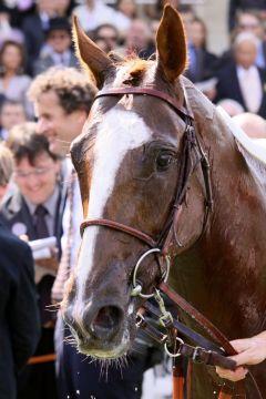 Lope de Vega nach seinem Sieg im Fränzösischen Derby. www.galoppfoto.de