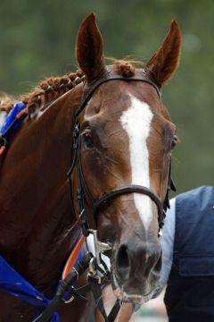 Lord of England im Portrait. www.galoppfoto.de