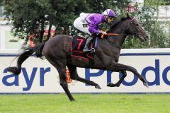 Nerium gewinnt im Stil eines besseren Pferdes. www.galoppfoto.de - WiebkeArt