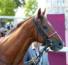 Noor Al Hawa am 30.9.2017 in Chantilly - Foto: Dr. Jens Fuchs