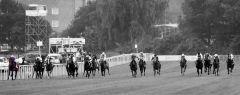 Nutan mit Andrasch Starke an den Innenrails auf dem Weg zum Derbysieg. Foto: Dr. Jens Fuchs