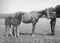 Orchidee II (GER) 1910