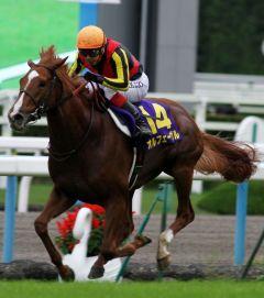 Orfevre im Kikuka-Sho (Japanese St.Leger), Gr. I: Damit holt er sich die Triple-Crown in Japan 2011. www.shibashuji.com