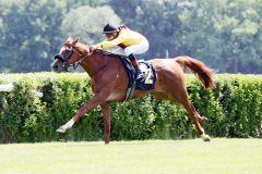 Beim dritten Start klappt es leicht: Oriental Dream gewinnt unter Andrasch Starke. www.galoppfoto.de - Sabine Brose