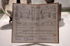 Pferdepass von Acatenango bei der Ausstellung in Münster. www.galoppfoto.de - Frank Sorge