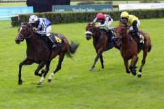Rainbow Royal hält die beiden Konkurrenten sicher in Schach. www.galoppfoto.de - Sabine Brose