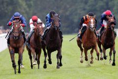 Das komplette Feld - der Sieger Real Value ist links zu sehen. www.galoppfoto.de