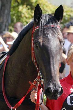Reine noire. www.galoppfoto.de - Sarah Bauer