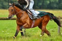 Qatar Racings Roque Runner hat noch eine Nennung für das Epsom Derby. www.rennstall-woehler.de