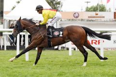 Royal Lion kommt nach mehreren Anläufen zu seinem ersten Sieg. www.galoppfoto.de - Sabine Brose