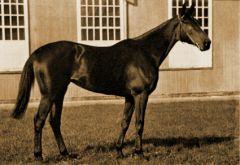 Legende Schwarzgold aus dem Gestüt Schlenderhan