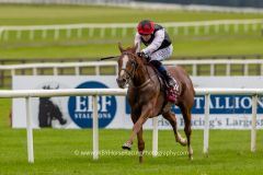 Eine Stute gewinnt das Irish St. Leger: Search for a Song unter Chris Hayes. Dan Heap / WBYHorseracingphotography