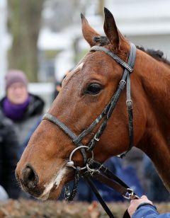 Sergeant, der erste Sieger für seinen Vater, Derbysieger Nutan - Foto: Dr. Jens Fuchs-