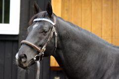 Stallion Manduro - auf der Rennbahn Weltchampion - stellt jetzt seine erste Siegerin. www.galoppfoto.de