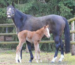 Mutter und Tochter gut gelaunt ... Katy Carr und ihr Stutfohlen von Shirocco, geb. 01.02.2011. Foto Julia Baum