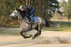 Sunnylea mit Trainerin Friederike Schloms bei der Morgenarbeit. www.galoppfoto.de - Sabine Brose