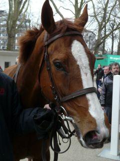 Timm's Pearly nach seinem Sieg in Neuss am 10.03.2012 (Foto Suhr)