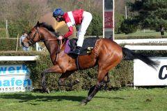 Das erste selbstgezogene Pferd aus der Listensiegerin Ronja, die für die rot-weißen Farben des Stalles Domstadt gewonnen hat, ist gleich beim Debut erfolgreich. www.klatuso.com - Klaus-Jörg Tuchel