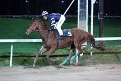 Beginnt das Rennjahr 2015 so wie er das von 2014 beendet hat: Victorious gewinnt mit Alexander Pietsch im Sattel. Foto: Dr. Jens Fuchs