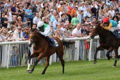 Wai Key Star bringt sich für das Derby ins Gespräch. www.galoppfoto.de - Sarah Bauer