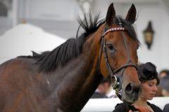 Was für ein Pferd - Cirrus des Aigles nach dem Sieg im Coronation Cup. www.galoppfoto.de - Petr Guth