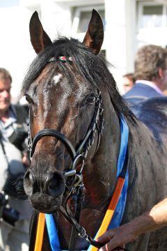 Weltstar nach dem Sieg im IDEE 149. Deutschen Derby. www.galoppfoto.de - Sabine Brose