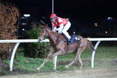 Western Queen gewinnt mit Alexander Pietsch am 26.01.2015 in Neuss. Foto: Dr. Jens Fuchs