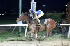 Leichter Sieg von Winaldo mit Michael Cadeddu (Foto: Dr. Jens Fuchs)