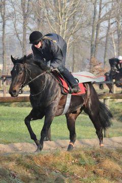 Black Arrow März 2012  Foto: www.Rennstall-Woehler.de