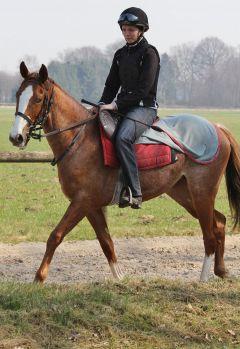 Chalkidikis Elpida März 2012  Foto: www.Rennstall-Woehler.de