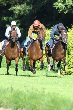 Empire Hurricane (re) mit Leo el Toro und Mona Alaya Juli 2012  Foto: www.Rennstall-Woehler.de