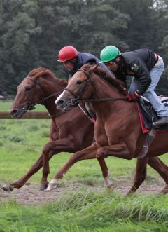 Hondo (li) und Top Tip September 2011  Foto: www.Rennstall-Woehler.de
