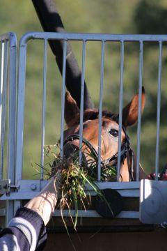 Hondo Oktober 2011  Foto: www.Rennstall-Woehler.de