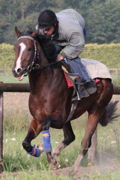 Kolonel Juni 2012  Foto: www.Rennstall-Woehler.de