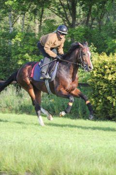 Kolonel Mai 2012  Foto: www.Rennstall-Woehler.de