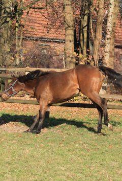 Notenmaid November 2011  Foto: www.Rennstall-Woehler.de