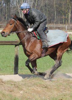 Sanogo März 2012  Foto: www.Rennstall-Woehler.de