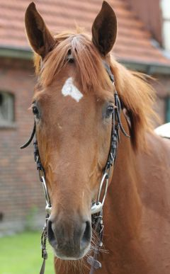 Saratino Juni 2012  Foto: www.Rennstall-Woehler.de