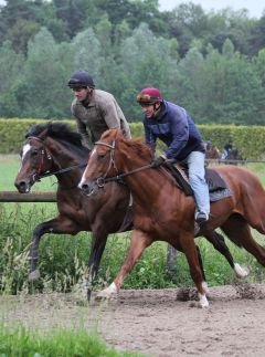 Araldo (li.) mit Hiscano (re.) Juni 2010  galoppfoto.de