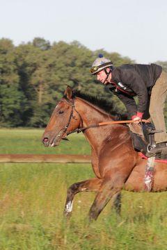 Mi Senor Juni 2011 Foto: www.Rennstall-Woehler.de