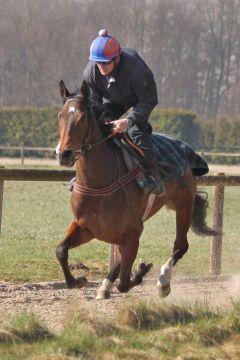 Neena März 2011  Foto: www.Rennstall-Woehler.de