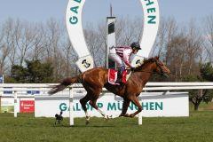 Wurde der Favoritenstellung gerecht - Royal Fox mit Dennis Schiergen siegte beim 3. Start überlegen. www.turfstock.com - Lajos-Eric Balogh