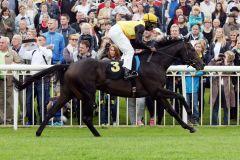 Wurde nach nach dem Vierlängen-Sieg in Hoppegarten doch für das Derby genannt - Gestüt Fährhofs Karpino mit Eduardo Pedroza. www.galoppfoto.de - Frank Sorge