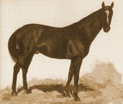 1887 Derbysieger Zsupan - ein Doppelderbysieger