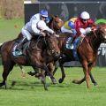 Queen's Harry kommt beim Einstand zu einem knappen Sieg. www.galoppfoto.de - WiebkeArt