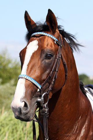Royal Youmzain soll im Gran Premio des Jockey Club starten. www.galoppfoto.de - Sabine Brose