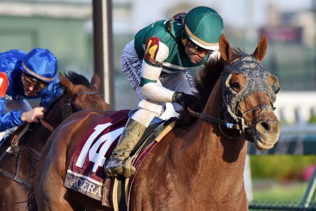 Der Breeders' Cup-Sieger Accelerate ist der haushohe Favorit für den Pegasus World Cup. www.galoppfoto.de - John James Clark