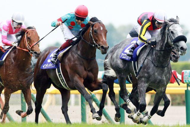 Indy Champ überrascht im Yasuda Kinen. www.galoppfoto.de - Yasuo Ito